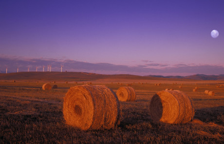 Wind Turbines And Hay Bales At Sunrise